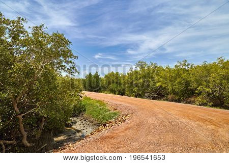 Rural dirt road bend to left mangrove trees along the road