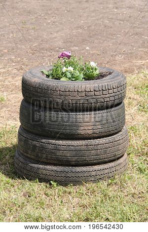 Four Old Tyres Being Used as a Garden Flower Bed.