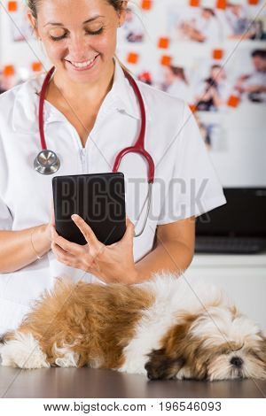 Veterinary clinic with a Shih Tzu at a tablet