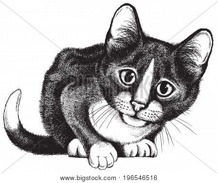 Vector sketch of a black and white cat crouching with a curious expression on its face.