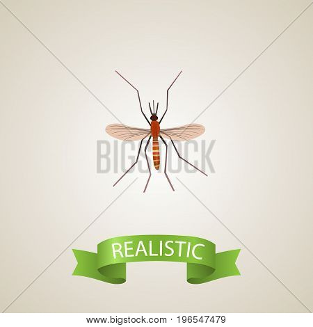 Realistic Mosquito Element. Vector Illustration Of Realistic Gnat Isolated On Clean Background
