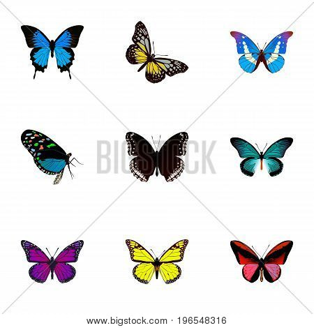 Realistic Hairstreak, Bluewing, Purple Monarch And Other Vector Elements