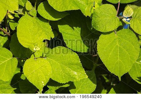 green leaf background with water drops green