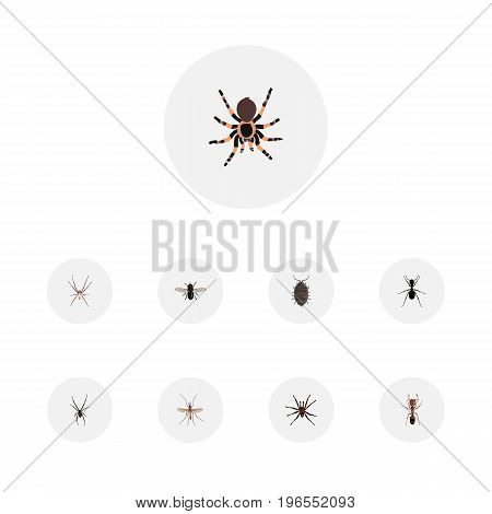Realistic Arachnid, Spinner, Spider And Other Vector Elements
