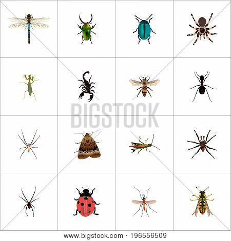 Realistic Poisonous, Grasshopper, Arachnid And Other Vector Elements