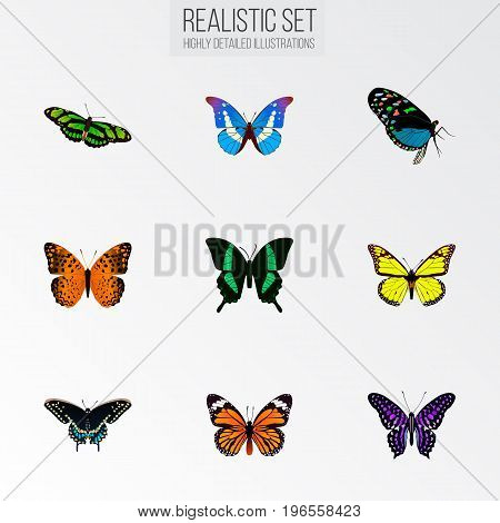 Realistic Hairstreak, Polyommatus Icarus, Bluewing And Other Vector Elements