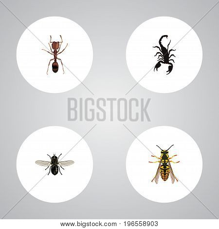 Realistic Poisonous, Bee, Emmet And Other Vector Elements