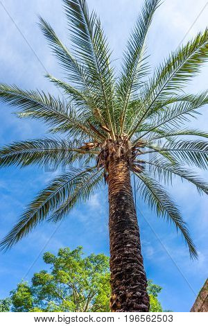 A Palm Tree Against A Blue Sky In Seville, Spain, Europe