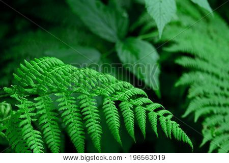Macro photo of a fern in the forest. Beautiful wild plant.