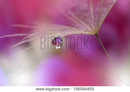 Dandelion on purple background closeup.Abstract macro photo with water drops.Artistic Background for desktop. Flowers made with pastel tones.Tranquil abstract closeup art   photography...