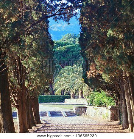 Cypress alley in park; Sveti Stefan Montenegro vintage effect