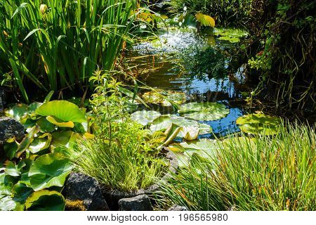 Beautiful Pond with green plants and a blooming water lily with water from a fountain splashing into the pond.