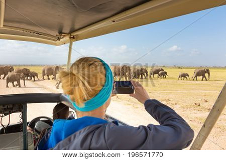 Woman on african wildlife safari, Amboseli national park, Kenya. Lady taking a photo of herd of wild african elephants with her smartphone. Open roof safari vehicle. Focus on elephants.
