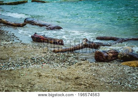 A Lake Erie beach with driftwood and rocks.