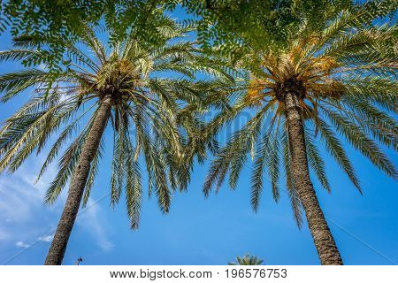 Palm Trees Against A Blue Sky In Seville, Spain, Europe