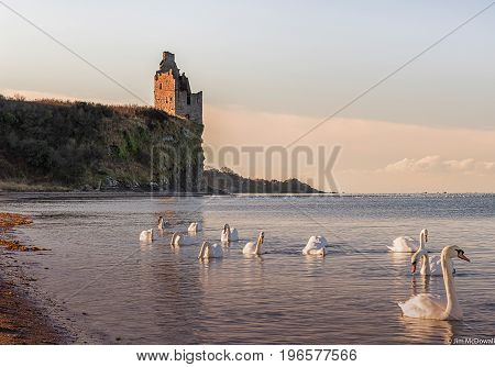 Ancient Ruins of Greenan castle and Swans that got quite close.