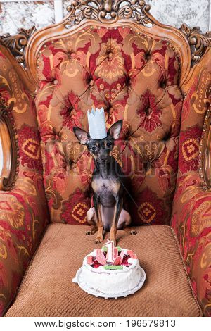 Favorite small pet birthday party. Celebration for puppy in paper crown