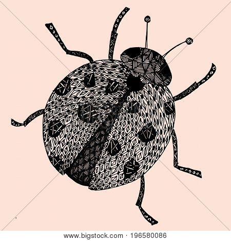 Lady-bird or ladybug isolated on light background . Hand-drawn doodle sketch illustration. Vector EPS10.