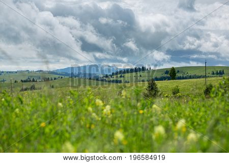 Beautiful meadow field with wildflowers against the background of mountains with clouds. Wildflowers closeup.