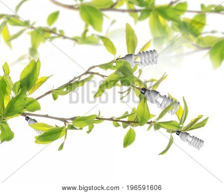 Light bulbs growing on tree branches against white background. Concept of energy saving and eco friendly technology