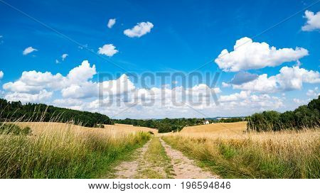 A dirt road in a wheat field, a panorama