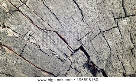grunge old wooden texture for background and design