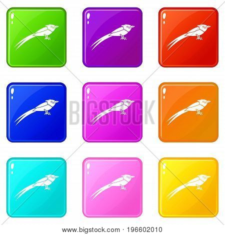 Asian paradise flycatcher icons of 9 color set isolated vector illustration
