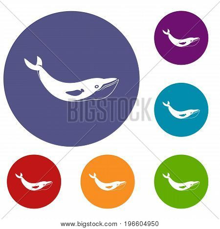 Whale icons set in flat circle red, blue and green color for web
