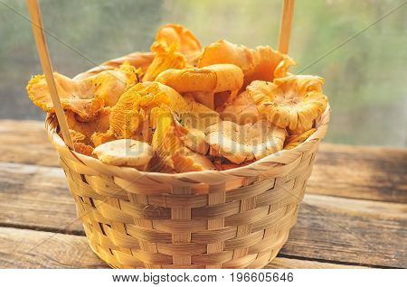 Basket with wild mushrooms yellow chanterelle On the background of the window