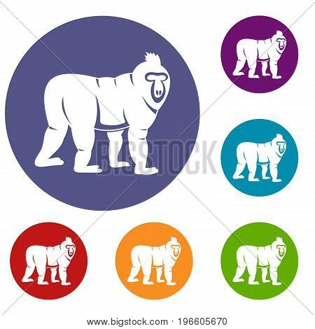 Mandrill monkey icons set in flat circle red, blue and green color for web