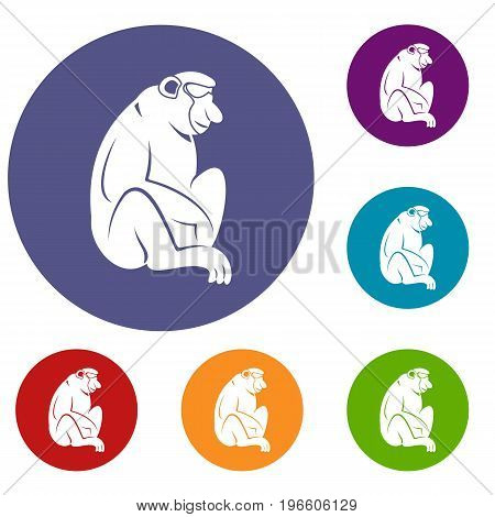 Orangutan icons set in flat circle red, blue and green color for web