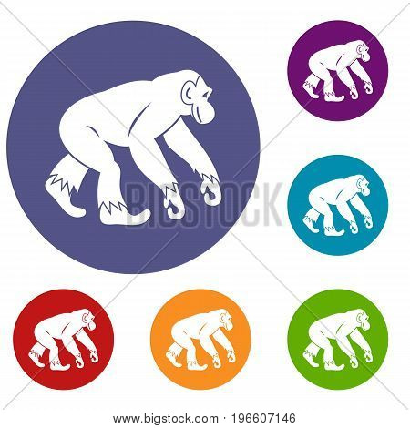 Monkey standing icons set in flat circle red, blue and green color for web