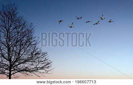Birds at sunrise nature concept panoramic view