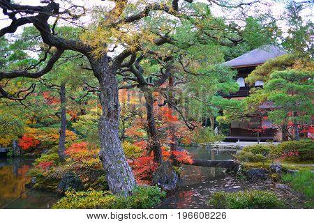 a house in a garden in autumn