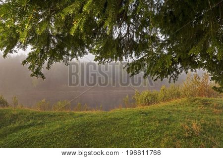 Scenic forest landscape with a large natural green archway composed of spruce branches over a the misty light