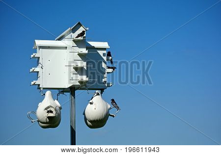 Large White Birdhouse with Birds on a Pole Against a Blue Sky