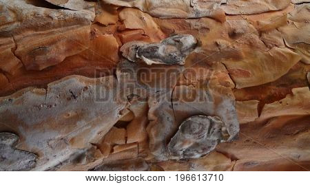 Pine bark. Texture pine bark. Pine bark background. Pine. Tree bark. Bark. Brown bark texture. Nature background. Pine wood.