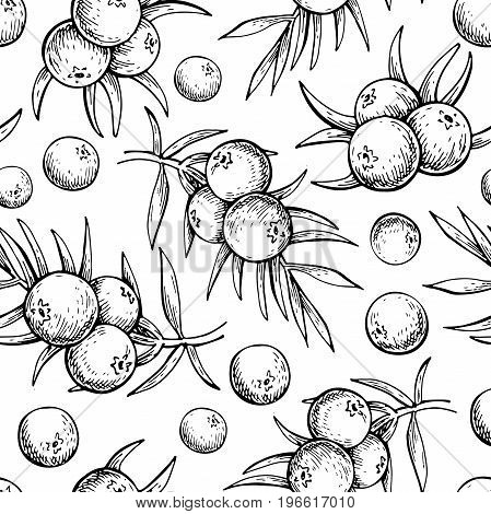 Juniper vector seamless pattern drawing. Isolated vintage  background with berry on, branch. Organic essential oil engraved style sketch. Beauty and spa, cosmetic ingredient. Great for packaging design.