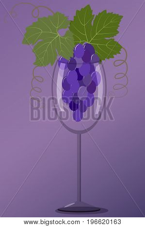 A bunch of black grapes in a wineglass on a purple background, vector illustration