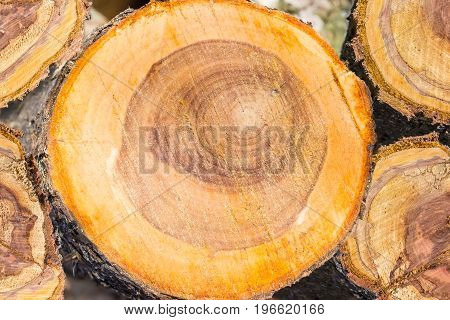 Background of the transverse cuts of the several partly rotten trunks of an old fruit trees covered sawdust