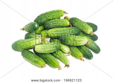 Pile of the freshly picked out cucumbers with droplets of dew on a white background