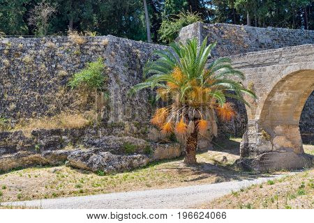 big palm tree against the background of old stone fortress with an ancient arch