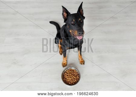 Beauceron Dog Against Bowl With Pedigree, Top View