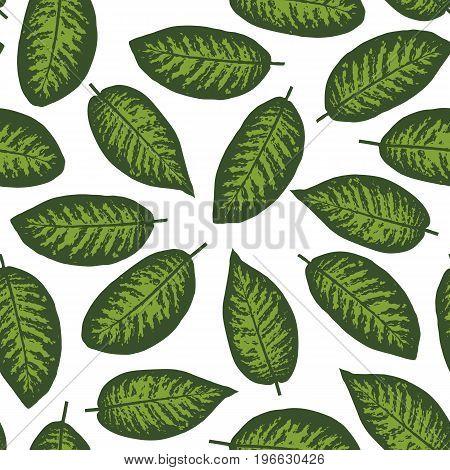 Dieffenbachia tropical leaf seamless pattern. Vector illustration