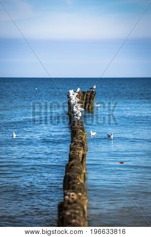 Gulls on groynes in the surf on the Poland Baltic coast
