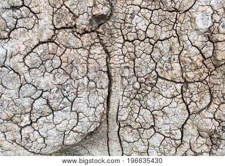 Detailed sharp macro image of rough wooden tree texture with multiple cracks and dents