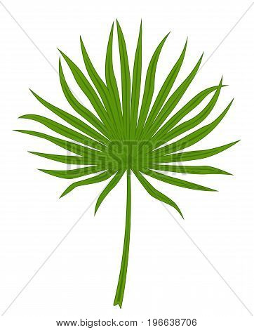 Green leaf of fan palm isolated on white background, illustration.