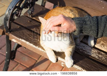 Homeless cat, pet and animals concept - Man stroking cat's head.