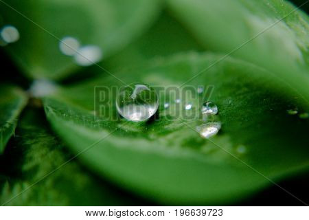 Little rain drop on green leaf, closeup and macro photography