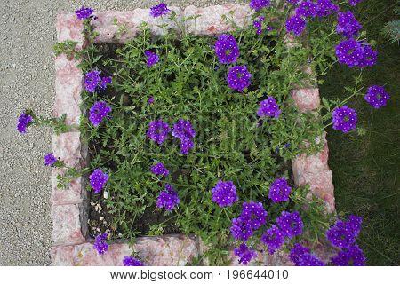 A flower in a purple flower bed